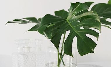 育てやすい南国風の観葉植物は?