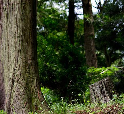 「杉」をDIYに取り入れてみよう